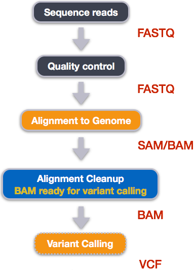 Wrangling Genomics: Variant Calling Workflow